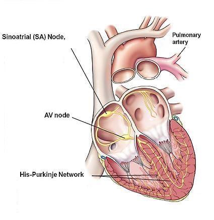 Желудочковая экстрасистолия симптомы